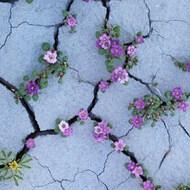 Desierto floreciente 🌷