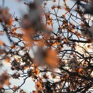 Unfocus to focus ⚖️ . . . #fotografia #photography #photooftheday #photo #focus #unfocused #unfocus #blossom