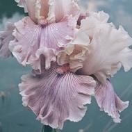 Esta noche nacerá una flor. Mi Pepita ❣️